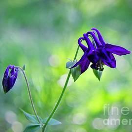 Purple Wildflowers by Ann Brown