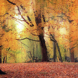 October Woodland Foliage by Jessica Jenney