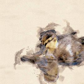 Quack Quack 2 by Darren Wilkes