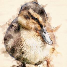 Quack Quack by Darren Wilkes