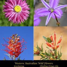 Quadtych WA Wildflowers-2020 by Deane Palmer