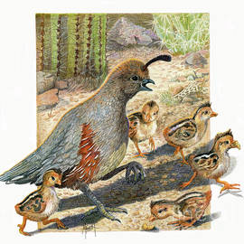 Quail Run by Marilyn Smith
