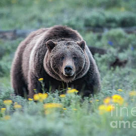 Queen of the Tetons - 399 by Sandra Bronstein