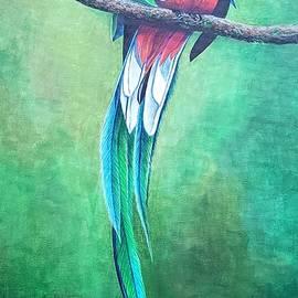 Quetzal by Pam Kaur