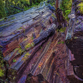 Quinault Rainforest 124 by Mike Penney