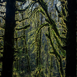 Quinault Rainforest 315 by Mike Penney