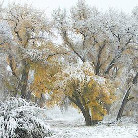Quite Winter Beauty by Flying Z Photography by Zayne Diamond