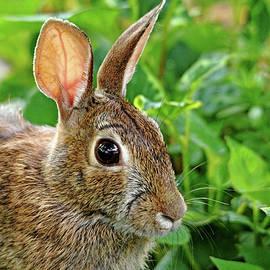 Rabbit Ears by Debbie Oppermann