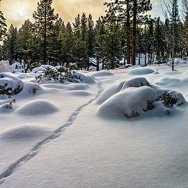 Rabbit Tracks by Maria Coulson