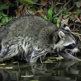 Raccoon fishing