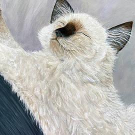 Ragdoll Cat Simba  by Karen Zuk Rosenblatt