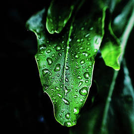 Rain On The Philodendron - analog edit by Scott Pellegrin