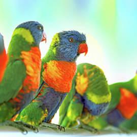 Rainbow Buddies by Az Jackson