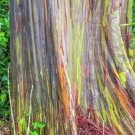 Rainbow Eucalyptus Magic by Donna Maltz
