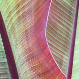 Rainbow Leaves by Kelly J Kreger