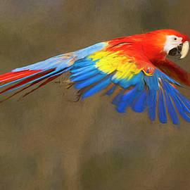 Scarlet Macaw in Flight by Art Cole
