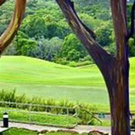 Rainbow Trees Hanalei Golf by Gary F Richards