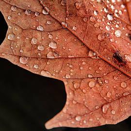 Raindrop Leaf by Joann Long