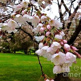 Raindrops On Blossoms by Debra Lynch