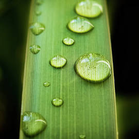 Raindrops on Palm Leaf by Morey Gers
