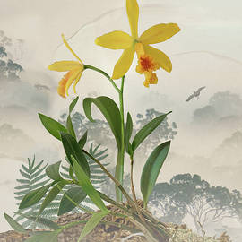 Rainforest Orchid by Spadecaller