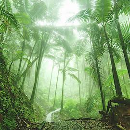 Rainforest Path by Emily Kent