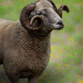Ram by Richard Smith