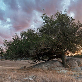 Ramona Grasslands Tree and Colorful Sunset Clouds by William Dunigan