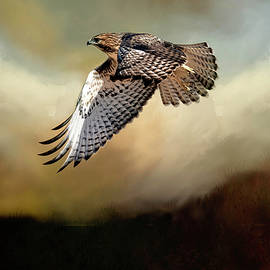 Raptor on the Hunt by Donna Kennedy