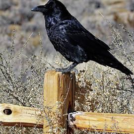 Raven Friend by Jennifer Robin