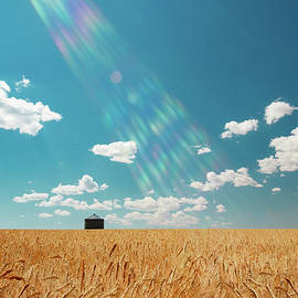 Rays of Light Upon the Wheat by Todd Klassy