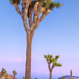 Reach - Joshua Tree National Park by Stephen Stookey