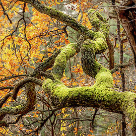 Reaching Autumn Branch by Nicklas Gustafsson