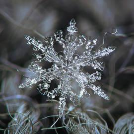 Real snowflake 2021-01-12_1 by Alexey Kljatov