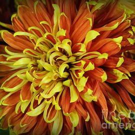 Autumn Mum in Red and Gold  by Dora Sofia Caputo