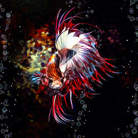 Red And White Crown Tail Betta Fish Portrait  by Scott Wallace Digital Designs