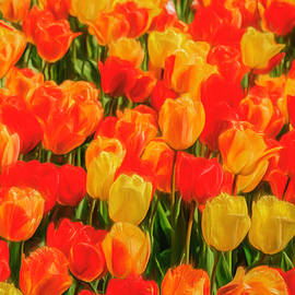 Red and Yellow Tulips by Elizabeth Coughlan