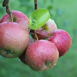Red Apples by Nieves Egelkraut