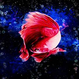 Red Asian Betta Fish Aquatic Portrait  by Scott Wallace Digital Designs