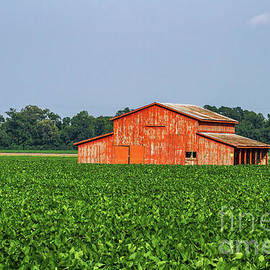 Red Barn in the Middle of the Bean Field by Scott Pellegrin