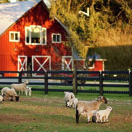 Red Barn by Steve Keyser