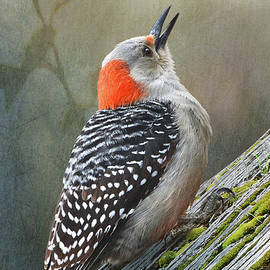 Red-bellied Woodpecker Forest by R christopher Vest