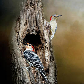 Red Bellied Woodpeckers by Kathy Kelly