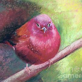 Red-Billed Firefinch by Susan Cunniff