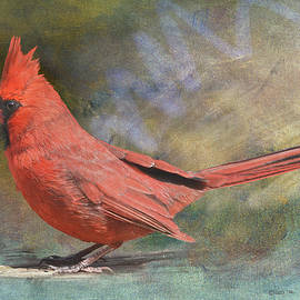 Red Bird Portrait by R christopher Vest