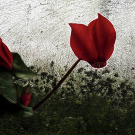 Red cyclamen and its bud by Al Fio Bonina