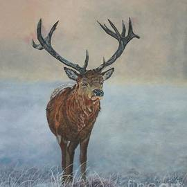 Red Deer Stag by Bob Williams