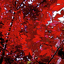 Red Explosion by Ian MacDonald