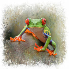 Red-Eyed Tree Frog Stylized Square Format by Teresa Wilson