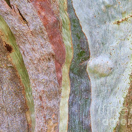 Red Gum Bark by Neil Maclachlan